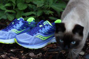 Katzen lieben saucony Schuhe